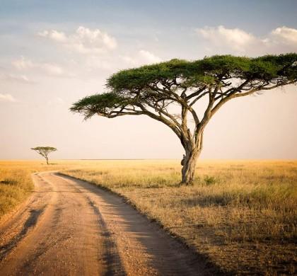 Сафари в Танзания и почивка на о-в Занзибар