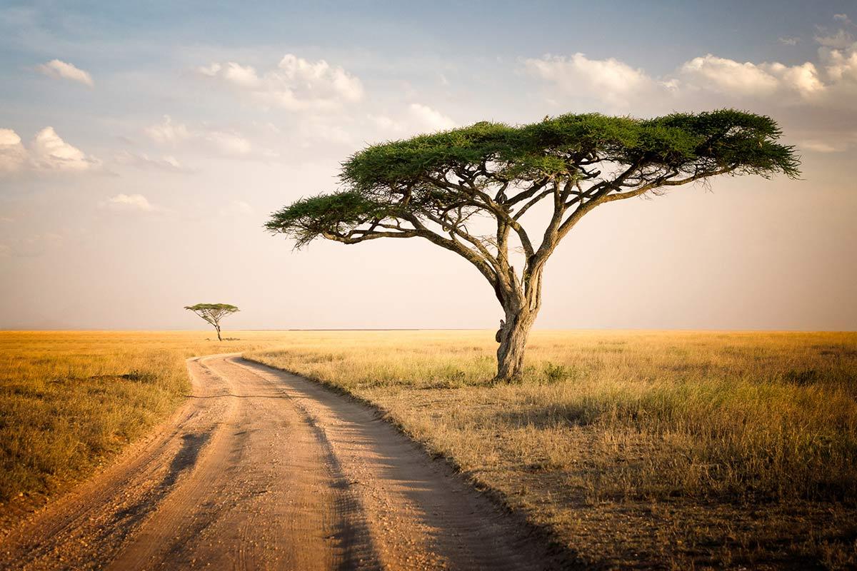 Tanzania-family-safari-the-Savannah